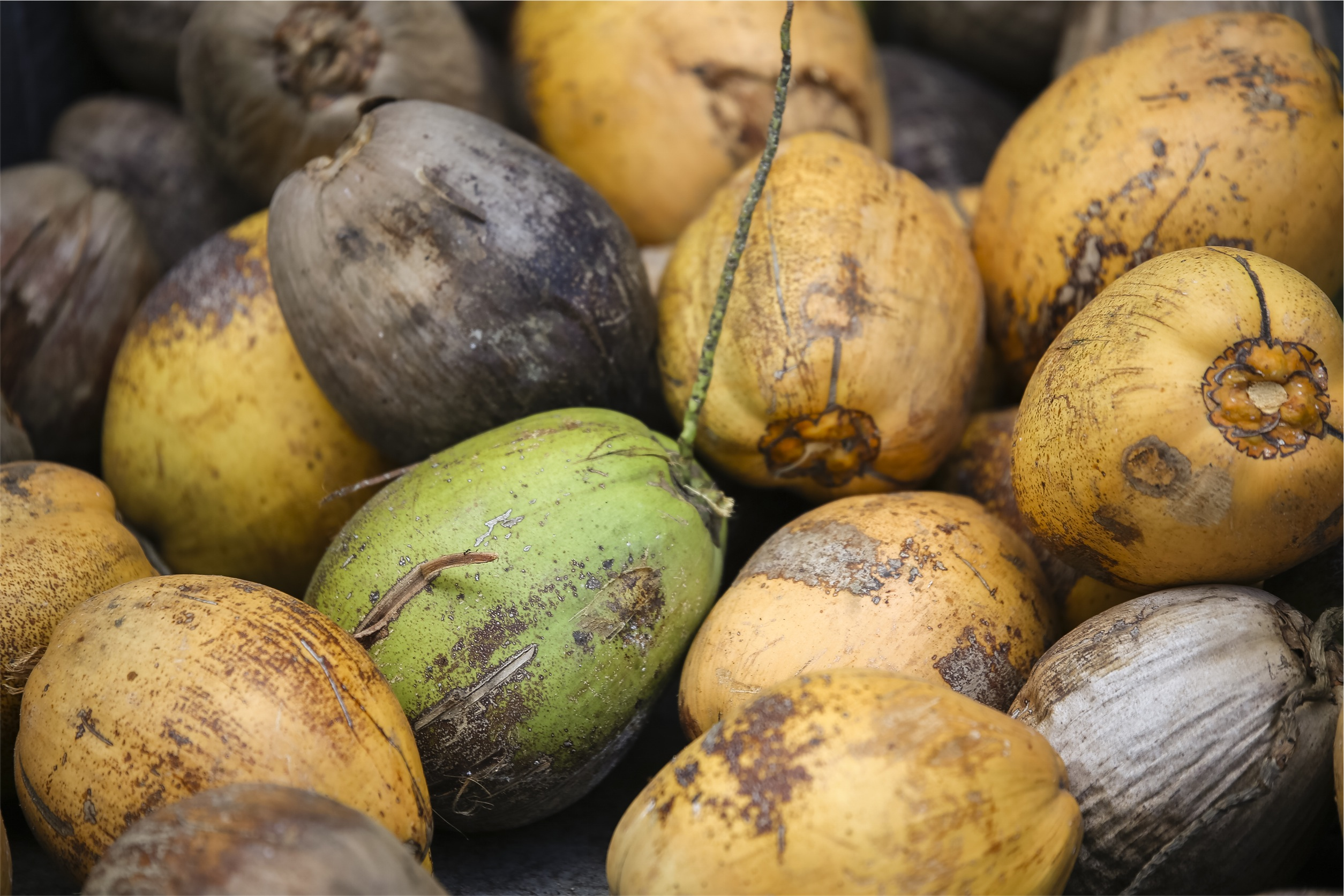 Consider Coconut Water Over Sports Drinks : Club USA Blog